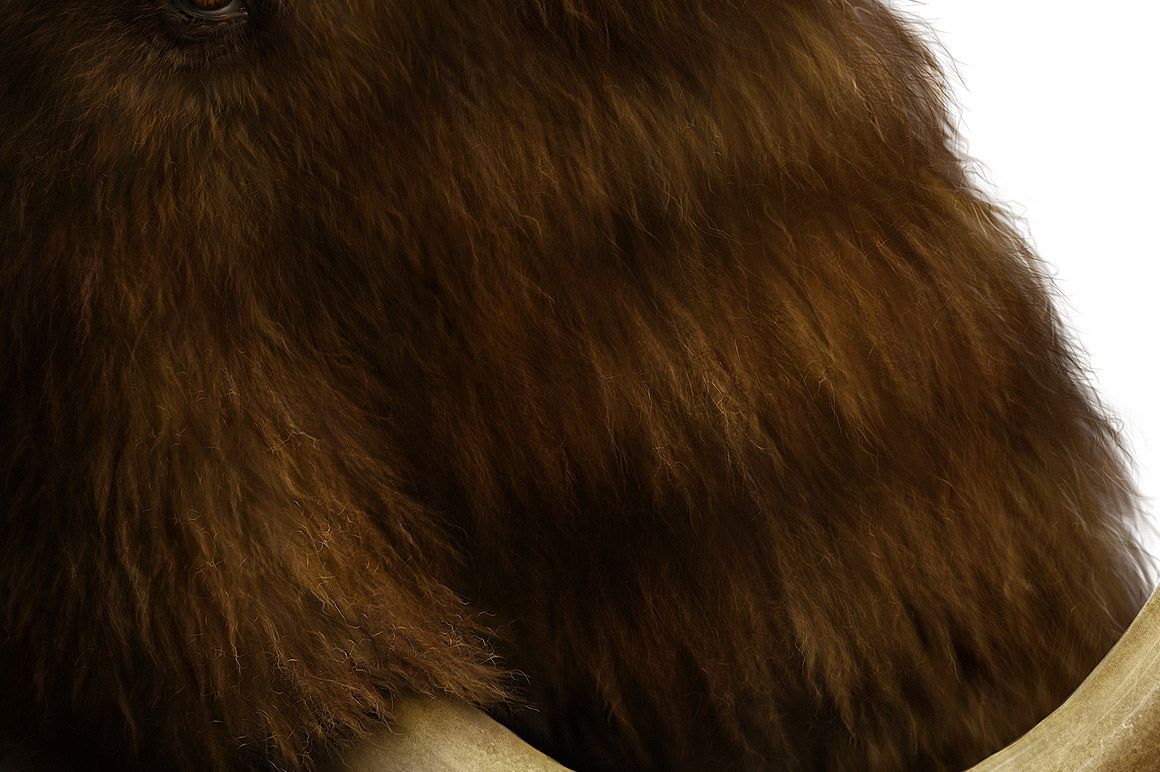 Bear Fur - Realistic fur brushes for Photoshop